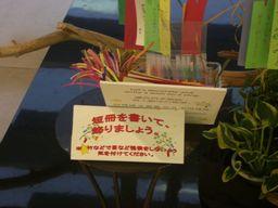 tanabata_1507b.jpg