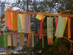 tanabata_1507c.jpg